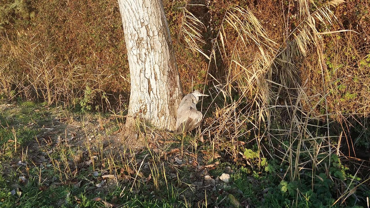 Fauna – Ambiente e Biodiversità