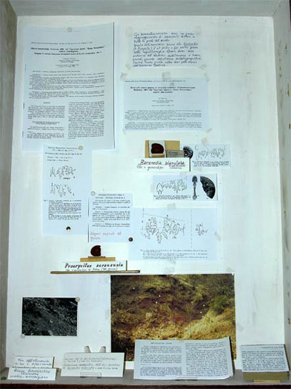 L'esemplare tipo del genere, proveniente da Piano Pozzo (versante sud del monte Serano), è esposto nell'aula laboratorio della palazzina di Geologia, annessa al Dipartimento di Scienze della Terra dell'Università di Perugia; nella stessa teca è esposto anche il tipo di Rarenodia.
