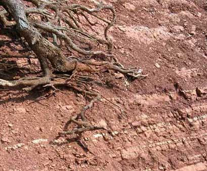 Rosso ammonitico a Casetta Ciccaglia, Trevi
