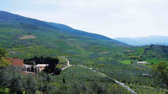 Il paesaggio olivetato a Trevi