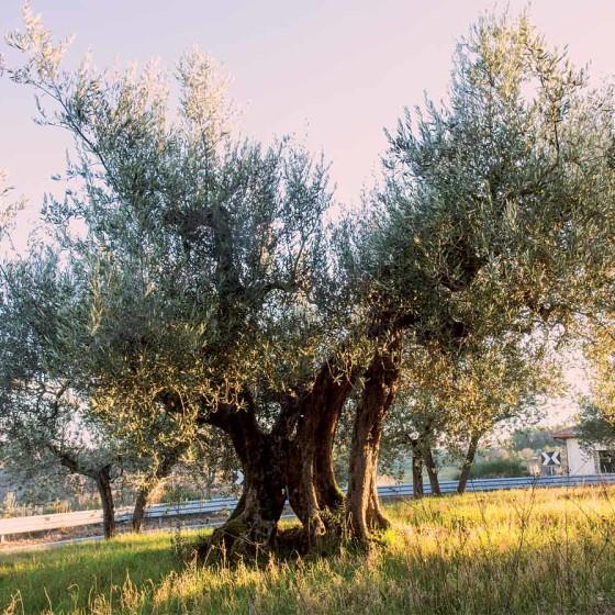 Olivo - Bevagna, Campo Letame, SR 316 dei Monti Martani