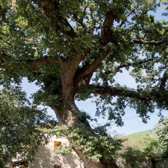 Roverella - Campello sul Clitunno, Fonti del Clitunno