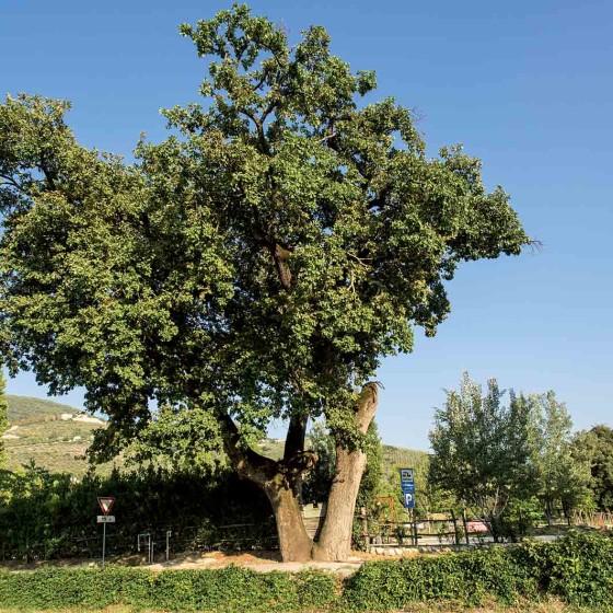 Roverella - Campello sul Clitunno, Fonti del Clitunno, antico frantoio Carletti