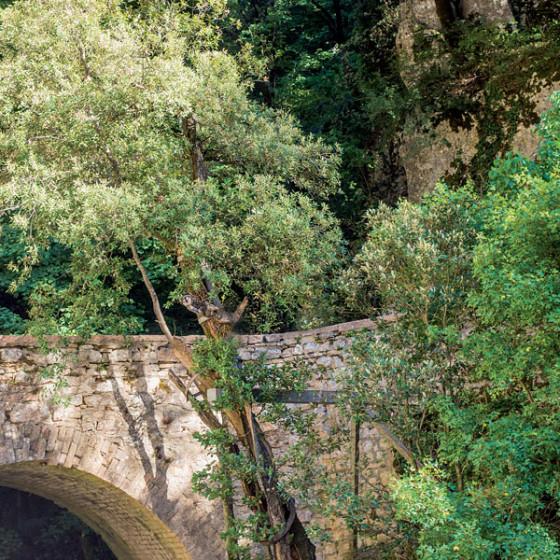 Leccio – Assisi, Eremo delle Carceri (1)