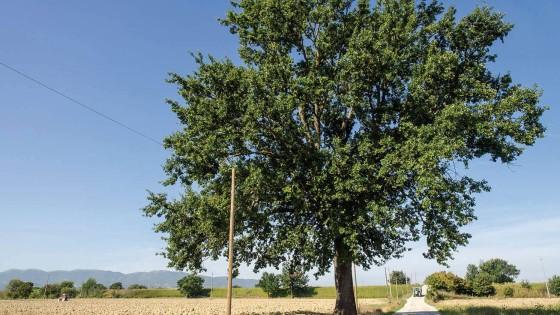 Farnia – Trevi, Cannaiola, via del Passo