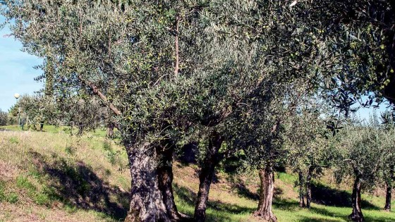 Olivo, Bevagna, Madonna delle Grazie