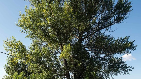 Pioppo – Trevi, Cannaiola, Selvette