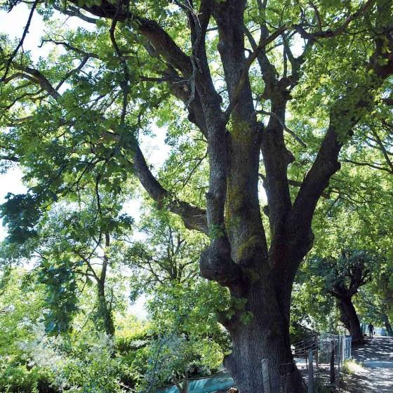 Roverella - Assisi, via Lorenzo Perosi