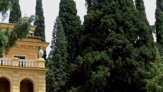 Cipresso comune - Spello, villa Fidelia