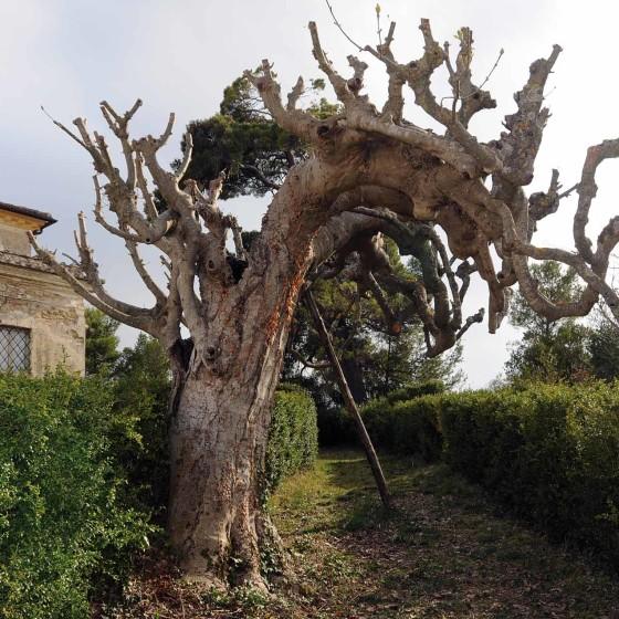 Orniello – Spoleto, Terraia, villa Pianciani