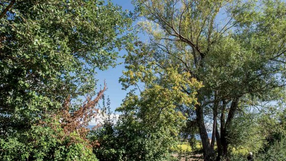 Salice - Montefalco, Fabbri