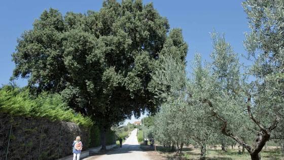 Leccio - Gualdo Cattaneo, Marcellano, via dei Colli