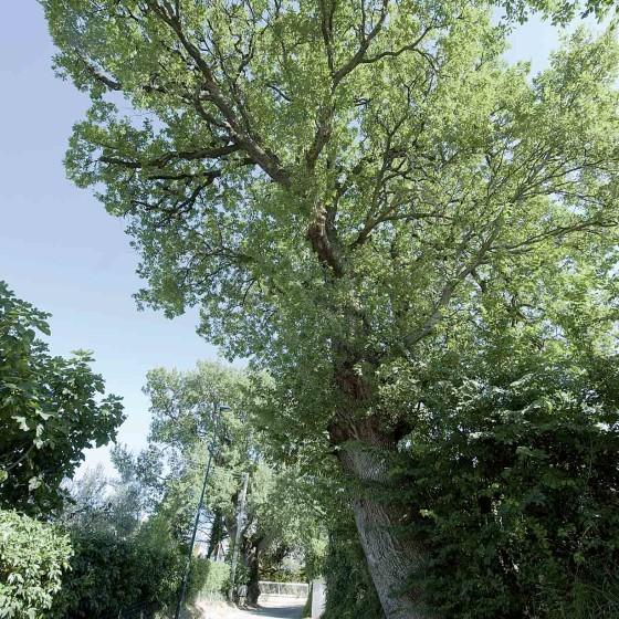 Roverella - Montefalco, Montepennino, Sala