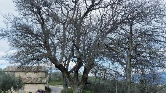 Roverella - Giano dell'Umbria, Seggiano