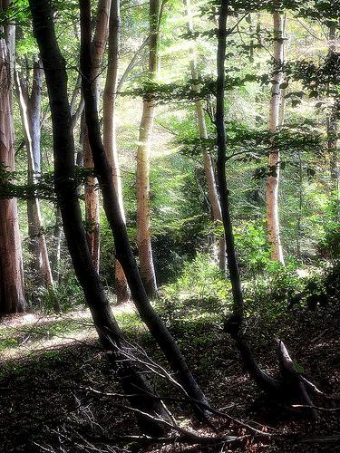Foreste [photo credit: Alpe Tedesco-autumnValganna-20151011-133110- via photopin (license)]