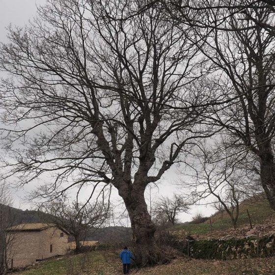 Acero (1), Campello sul Clitunno, Pettino