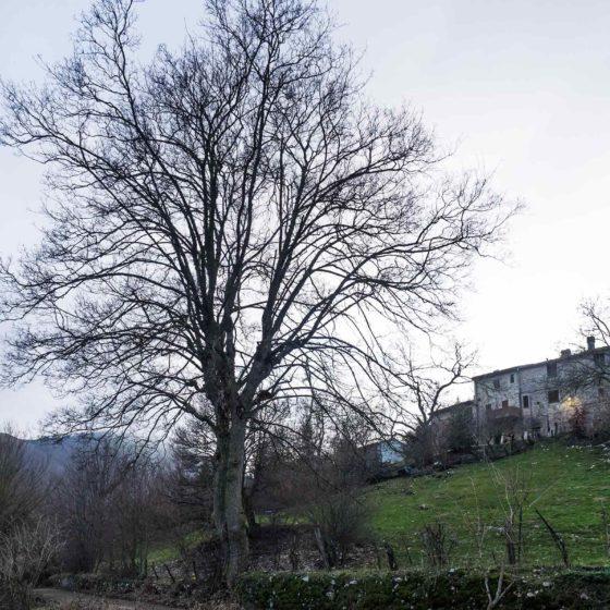 Acero (2), Campello sul Clitunno, Pettino