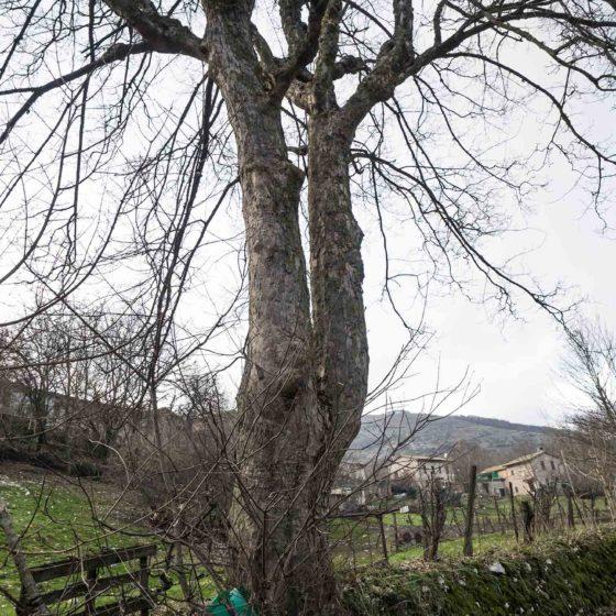 Acero (2), particolare, Campello sul Clitunno, Pettino