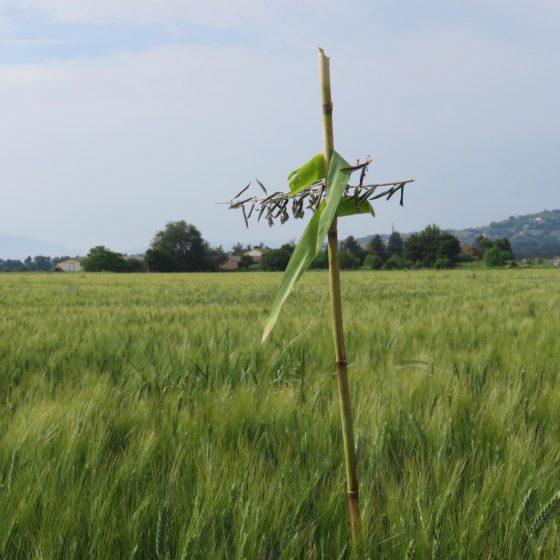 Croce di Giglio o Croce dei Campi, fotografata da Angelo Velatta a Sterpete (Foligno)