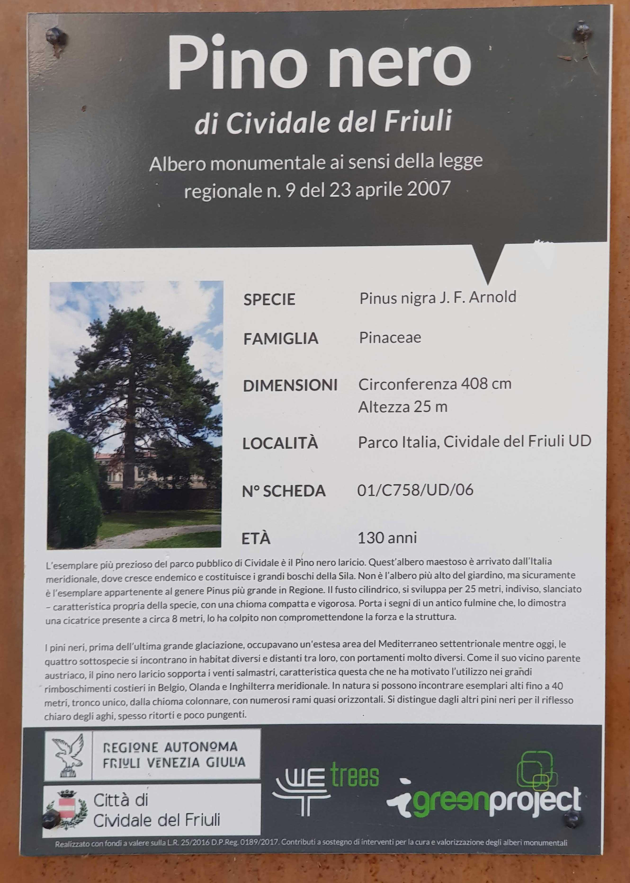 Pinus nigra subsp. laricio, Pino nero laricio, albero monumentale, targa illustrativa, Giardini pubblici - Cividale del Friuli