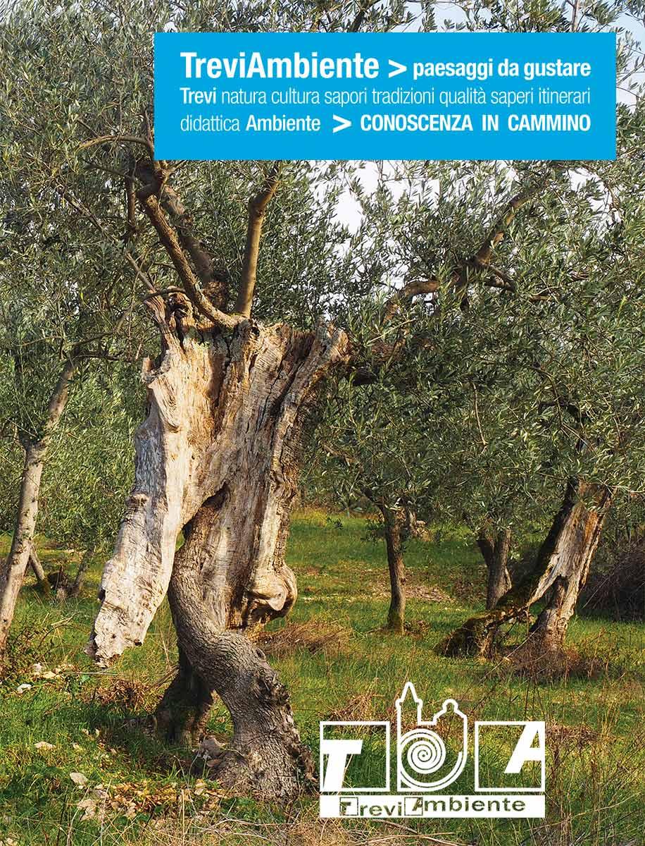 Grafica di Danilo Rapastella, Tiziana Ravagli. La foto dell'olivo che cammina è di Giampaolo Filippucci, Tiziana Ravagli