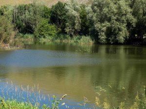 Parco di Colfiorito, la palude, domenica 18 giugno 2017, Festa dei Boschi