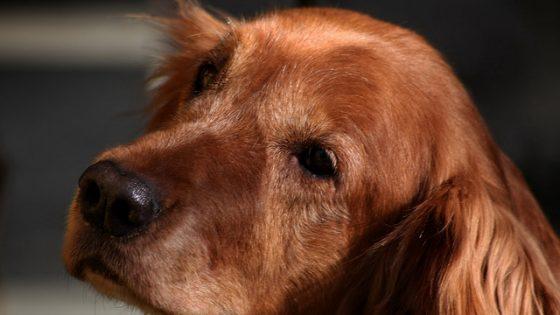Il nostro amico cane - [photo credit: Jody Art via photopin cc]
