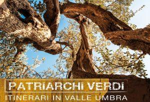 Patriarchi Veri: una visione davvero inusuale di un olivo plurisecolare e monumentale