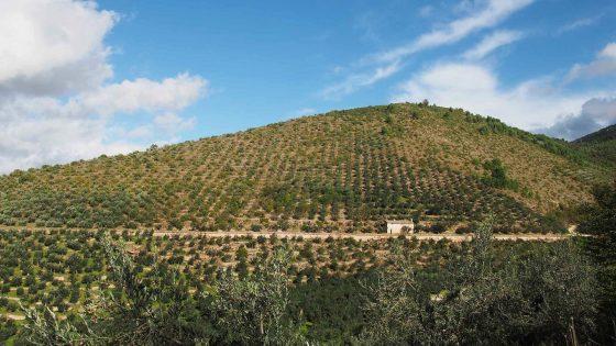 Il paesaggio olivetato storico di Trevi, lungo l'acquedotto medievale