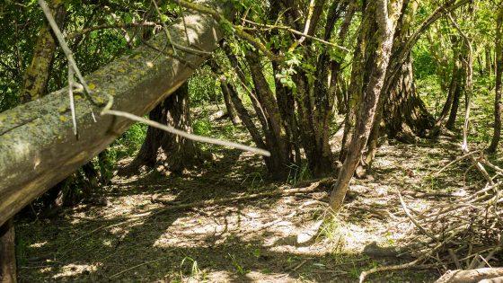 Parco di Colfiorito, il bosco igrofilo, domenica 18 giugno 2017, Festa dei Boschi