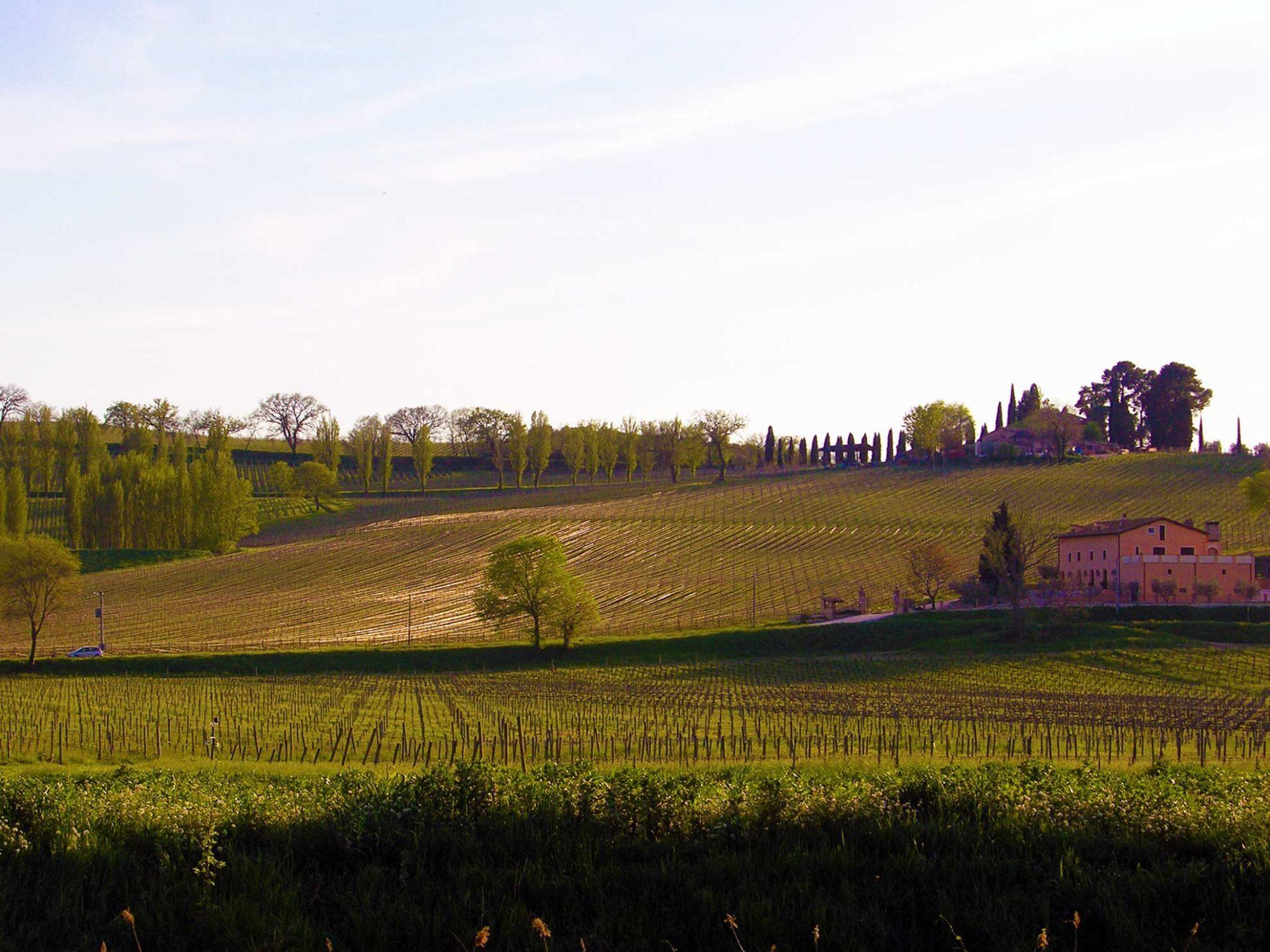 Lo splendido panorama dei vigneti tra Montefalco e Bevagna, visto dalla pista ciclabile Spoleto - Assisi