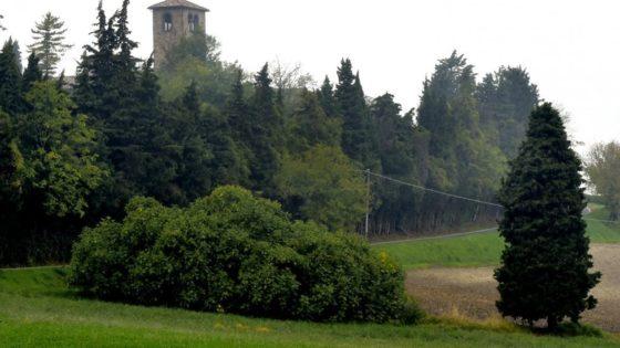 Fico dell'abbazia di San Basilide (Parma)