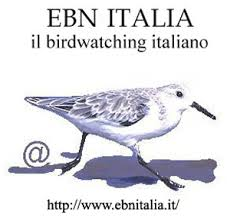 EBN Italia [logo]