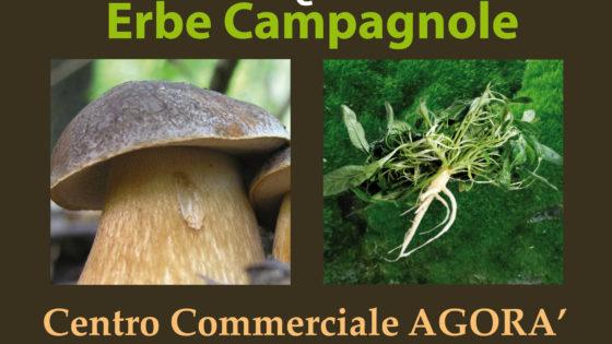 Mostra funghi ed erbe campagnole, Agorà Foligno, 29 ottobre 2017