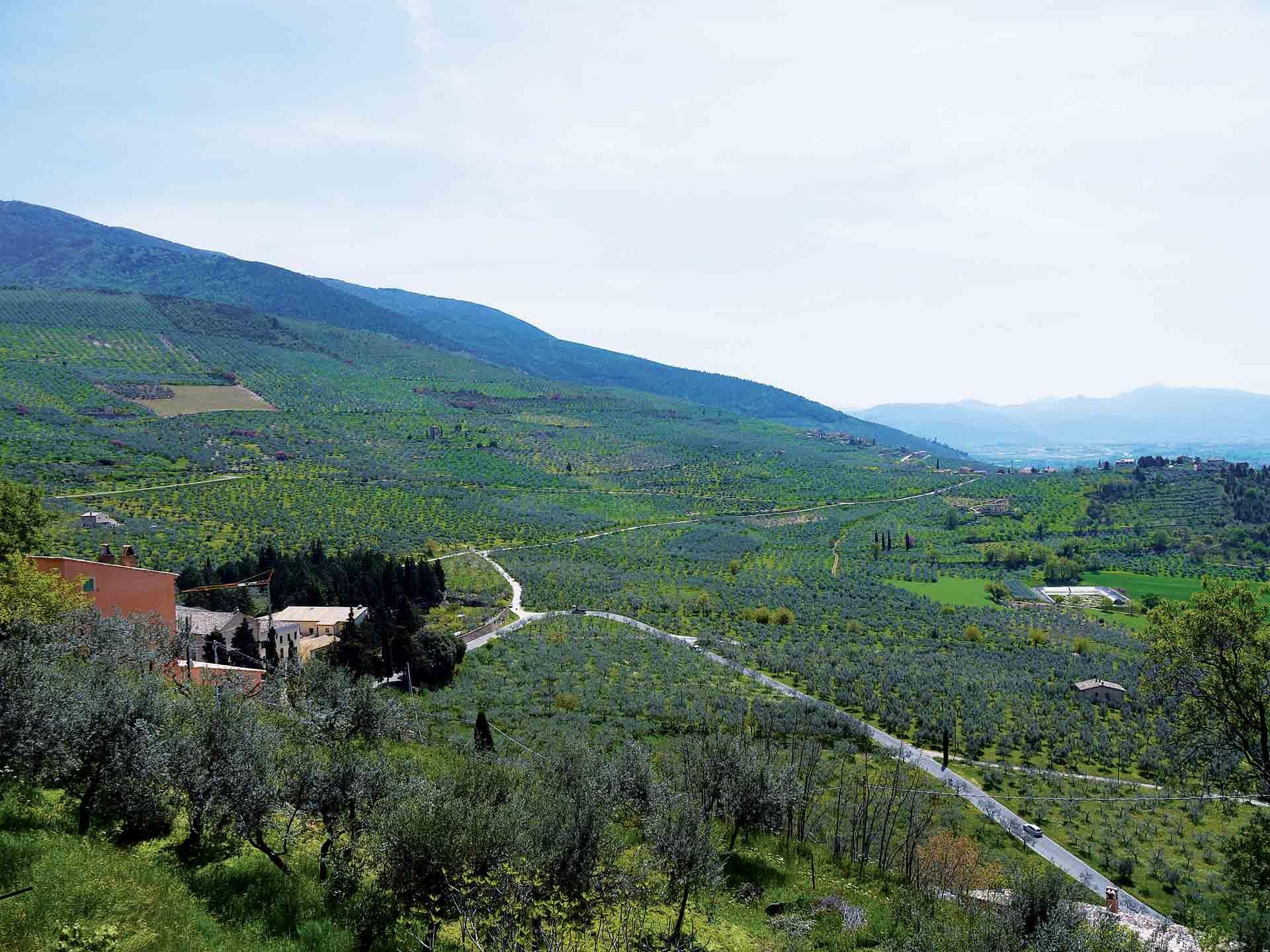 Il Paesaggio olivetato di Trevi - Foto di Giampaolo Filippucci & Tiziana Ravagli