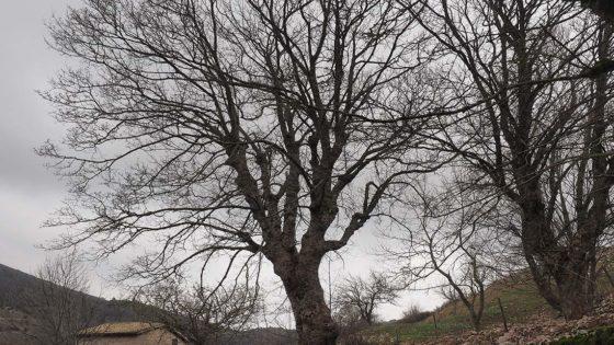 Acero (1), Campello sul Clitunno, Pettino, via di Pettino. Foto di Giampaolo Filippucci & Tiziana Ravagli
