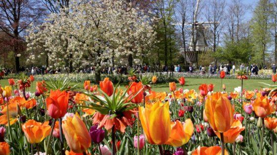 Olanda: 7 milioni di fiori nel romantico Keukenhof. Ente del turismo olandese