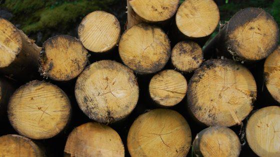 Tronchi, biomasse [via pixabay, foto di temprb0, CC0 Creative Commons, Libera per usi commerciali, Attribuzione non richiesta]
