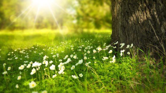 Primavera, foto diLarisa-K, via pixabay, Pixabay License, Libera per usi commerciali, Attribuzione non richiesta